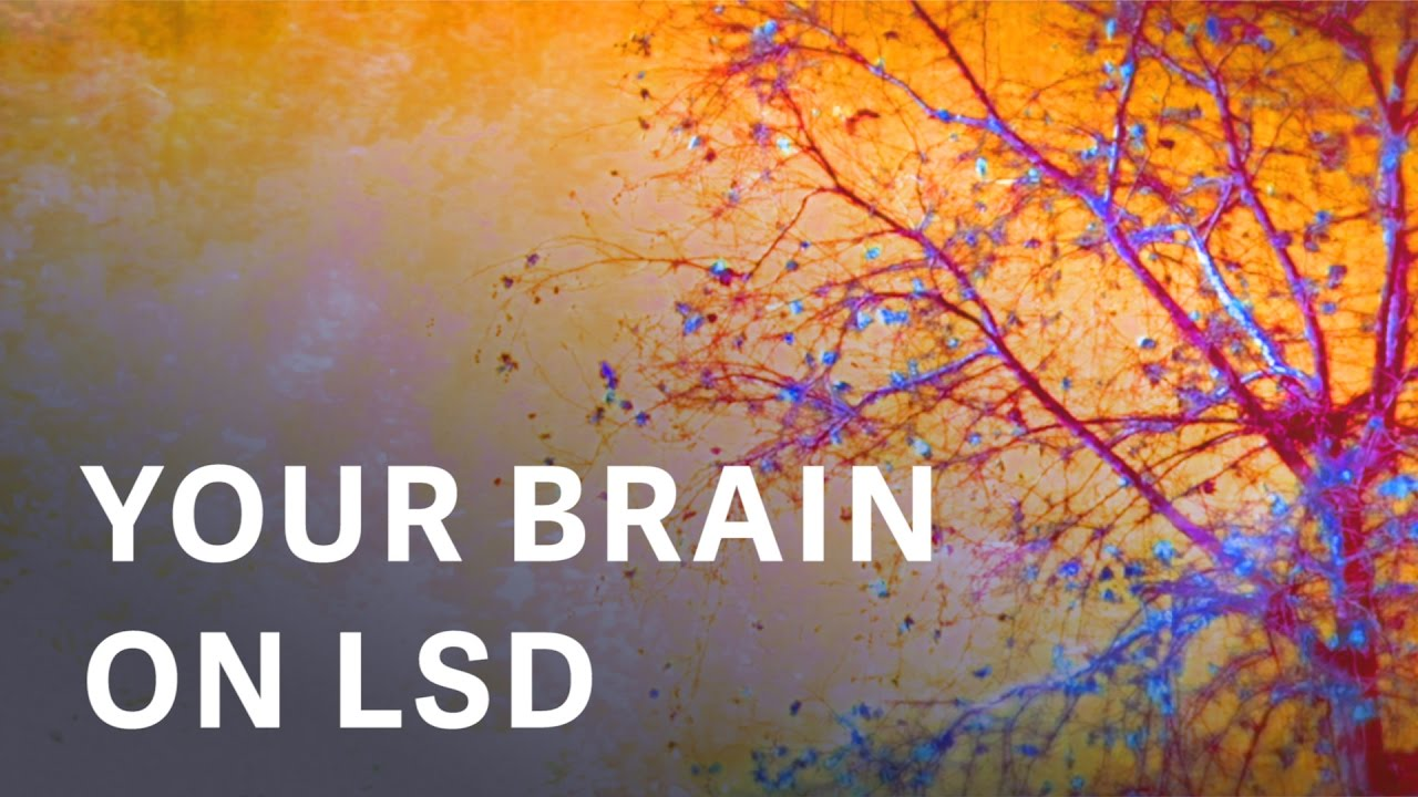 the first modern images of a human brain on lsd youtube