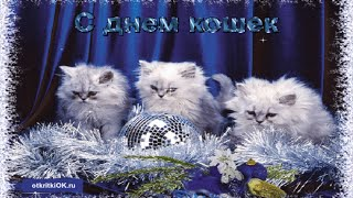 Поздравления с днем кошек