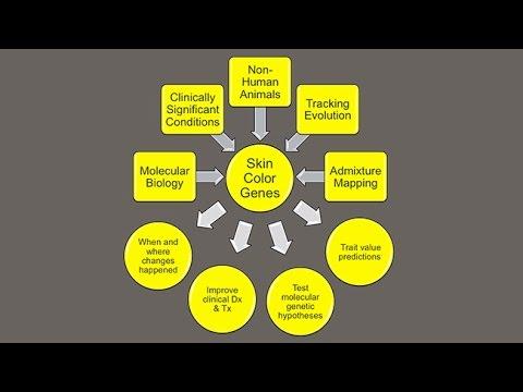 CARTA: Unique Features of Human Skin–Mark Shriver: The Genetics of Skin Pigmentation