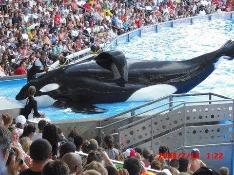 SeaWorld's Killer Whale's Splashing Visitors (in 2009)
