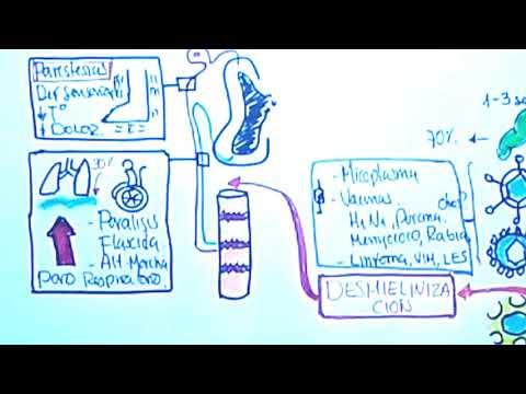 GUILLAIN BARRE (Etiopatogenia, Fisiopatología, Diagnóstico, Tratamiento)