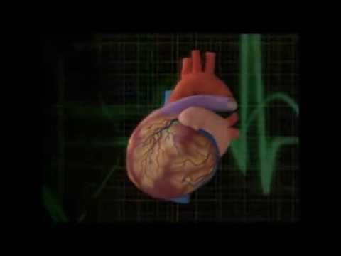 Blood flow from heart to Head and return flow to heart