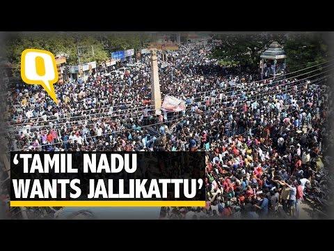 The Quint: Jallikattu Stirs Protest Across Tamil Nadu, CM to meet PM Modi