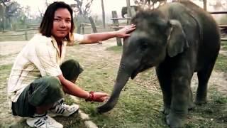 Download Video Elephant my Friend MP3 3GP MP4