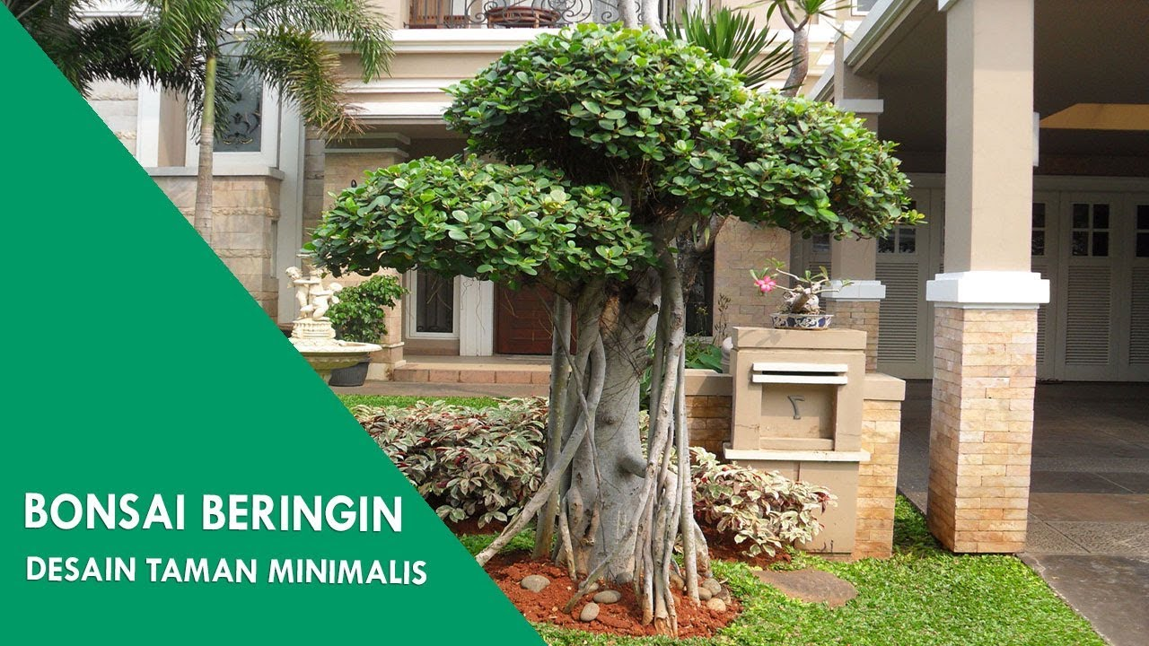 Banyan Bonsai Tree At Minimalist Garden Design