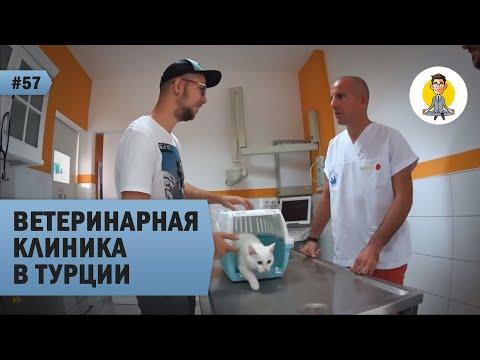 ВЕТЕРИНАРНАЯ КЛИНИКА В ТУРЦИИ: прием у ветеринара!