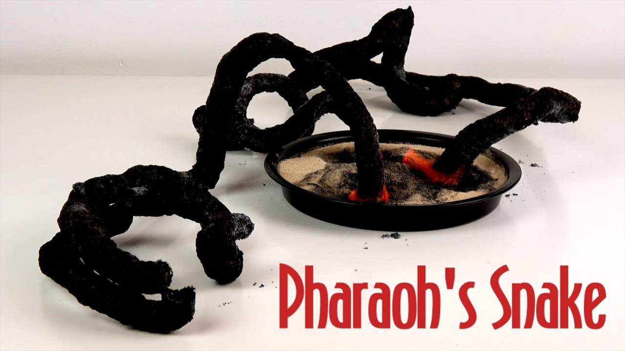 amazing black pharaoh s snake 3 pharaoh s serpent science