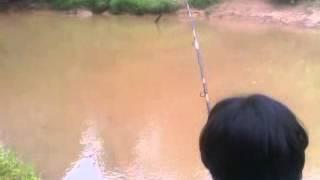 Bertarung dengan ikan lampam