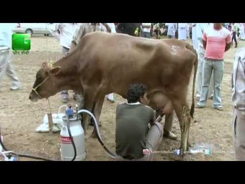Pashupalan Times: Steps in Animal Husbandry - 3 Min