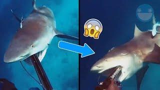 10 Encuentros Cercanos con Tiburones Captados en Vídeo que te Dejarán Helado