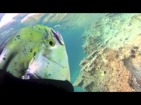 Spearfishing Thassos Mahi-Mahi