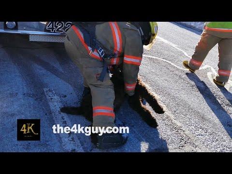 Dog rescued by firemen with CPR / Pompiers font le RCR sur un chien 1-28-2015