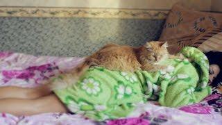 Кот делает массаж девушке
