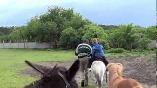 Konie i kucyki. Przejażdżki kucykiem - Świat Zwierząt Witoldzin 17