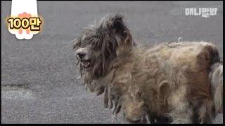 """""""그냥 걸레인 줄 알았어요"""" l """"Thought This Dog Was A Mop"""""""