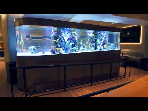A Hockey-Themed Shark Tank For The San Jose Sharks | Tanked