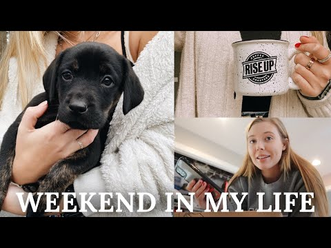 VLOG: celebrating valentine's day + meeting our new puppy!