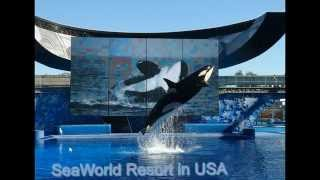 seaworld san diego discount tickets | seaworld orlando tickets | seaworld food in USA