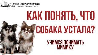 Как понять, что собака устала? Учимся понимать вашу собаку и ее мимику