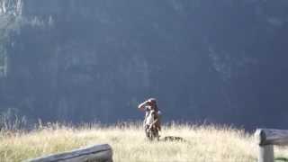 """Trailer """"Quello che i pastori sanno e tanta gente ignora"""""""