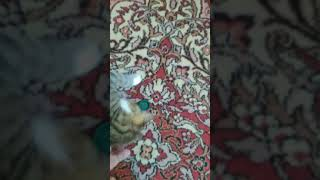 Кошка Маша приносит пробку