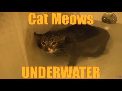 Cat Meows Underwater [ORIGINAL VIDEO]