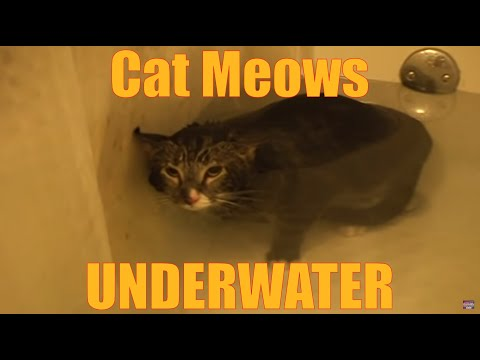 Cat Meows Underwater [ORIGINAL VIDEO]