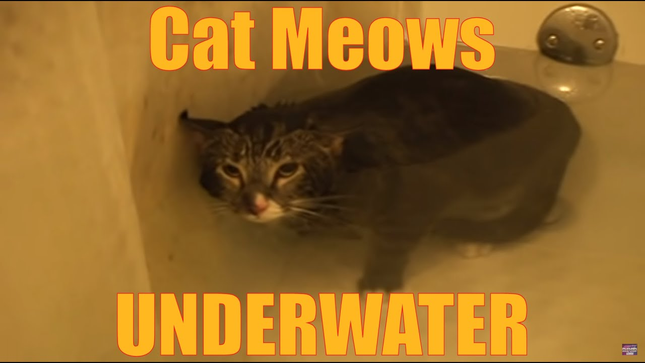 Cat Meows Underwater