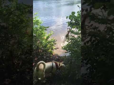 Ivy and Stella - Goose Pond (Keene NH)