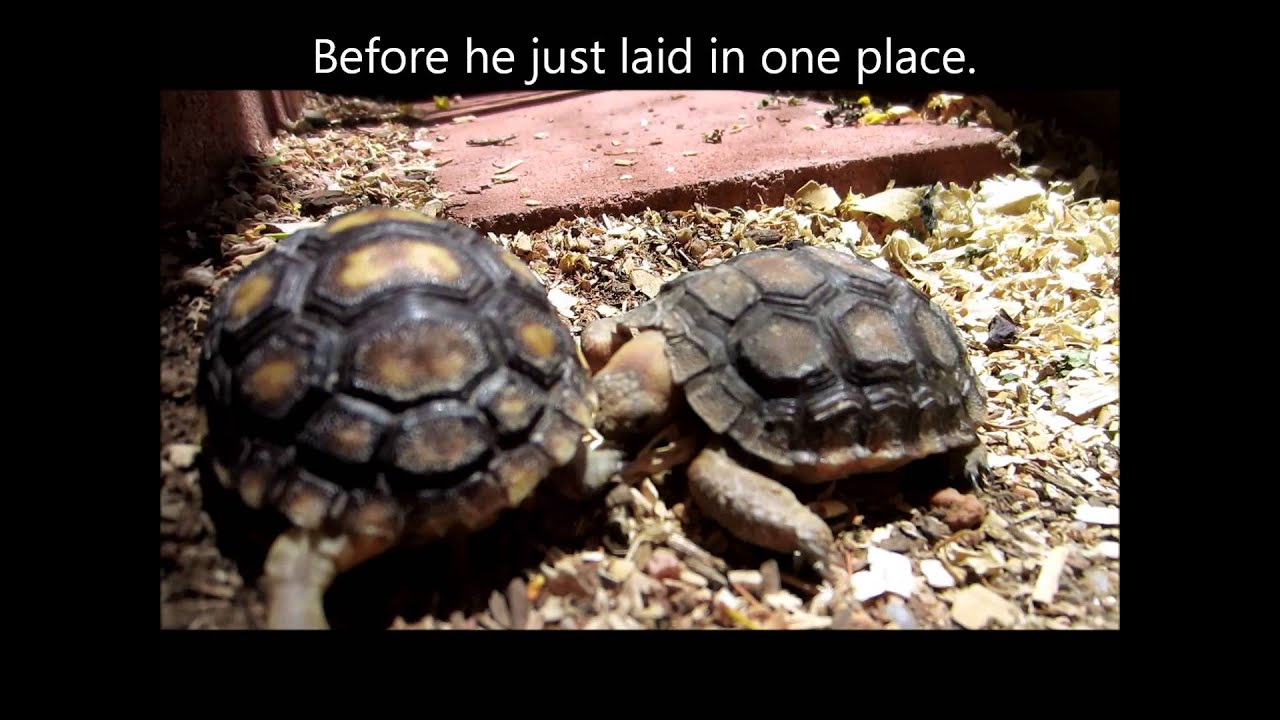 Sick Tortoise Update - YouTube