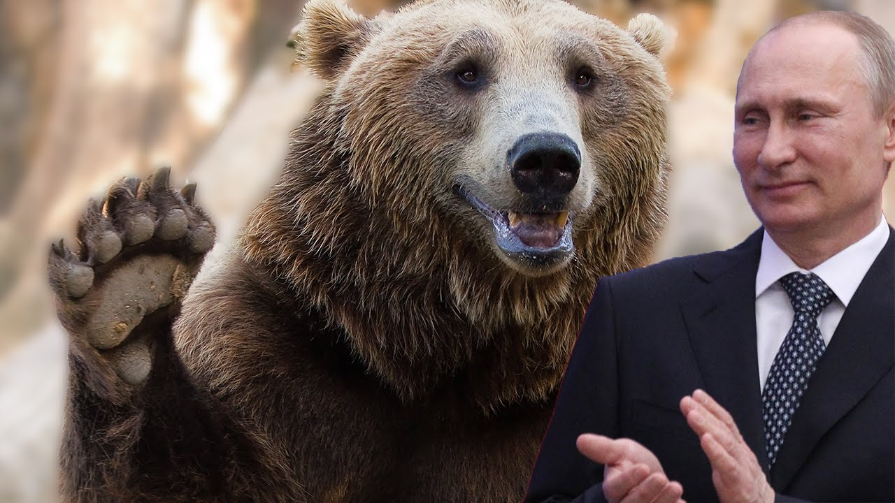 Putin Holds A Show Stopping Bear Loving Press Conference Youtube