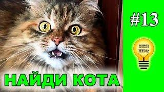 Найди кота на фото 😺 (#13) от DiKSi