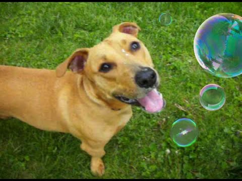Funny dog video tuna fish joe eating bubbles youtube for Is tuna fish good for dogs