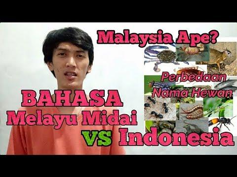 Melayu Malaysia ape? Bahasa Melayu Midai VS Bahasa Indonesia #NameHewan