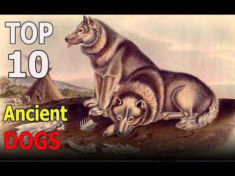 Top 10 Ancient Dog Breeds | Top 10 animals