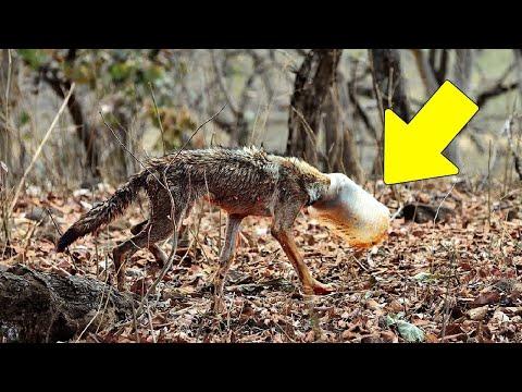 رجل وجد هذا الحيوان في الغابة وعندما اقترب منه كانت الصدمة... انظروا ماذا حدث!!  - نشر قبل 6 ساعة