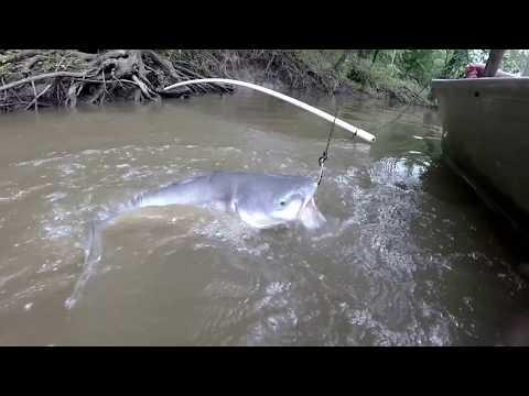 Kayak fishing kansas milford lake blue catfish doovi for Milford lake fishing report