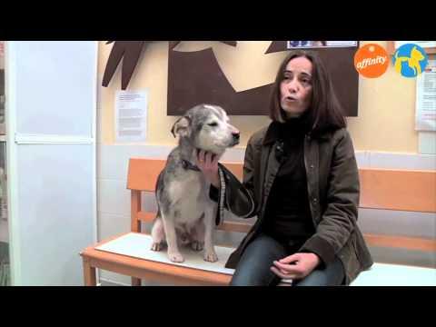 Más que mascotas - ANAA Voluntariado - Más que perros y gatos 9