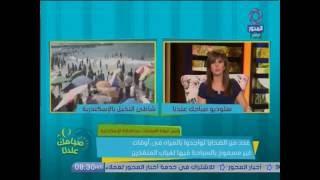 فيديو.. غرف عمليات الإسكندرية: شاطئ النخيل غير تابع للمحافظة
