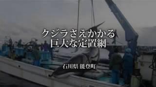 クジラさえかかる巨大な定置網 カツオクジラ 検索動画 12