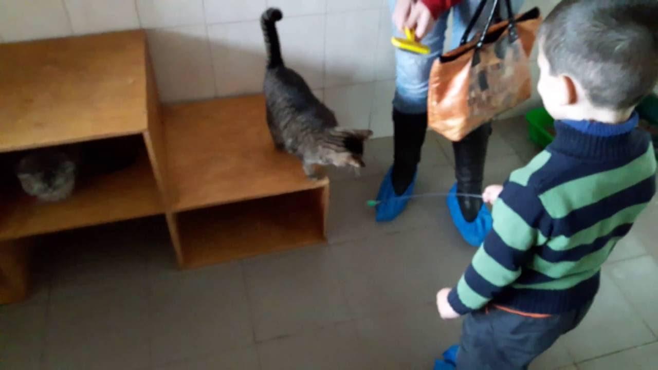 Дверцу для кошки купить в интернет-зоомагазине