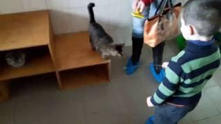 Приют для животных Харьков (день открытых дверей) КОТЫ