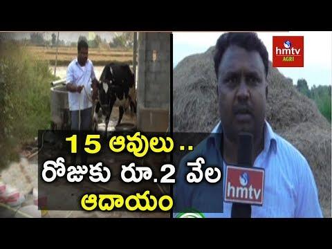 Dairy Farming   Success Story of Dairy Farmer Sadanandam   hmtv Agri