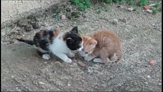 Two abandoned kittens cry out loud for their mom