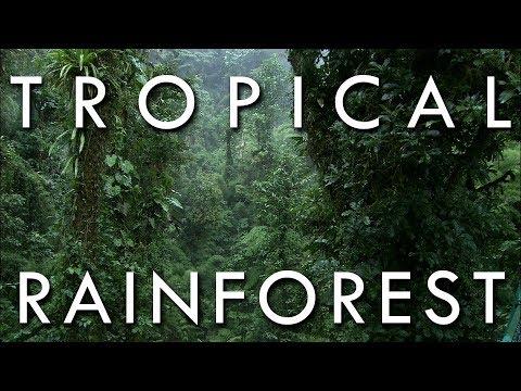 Tropical Rainforest - Secrets Of World Climate, Episode 1 (OLD VERSION)