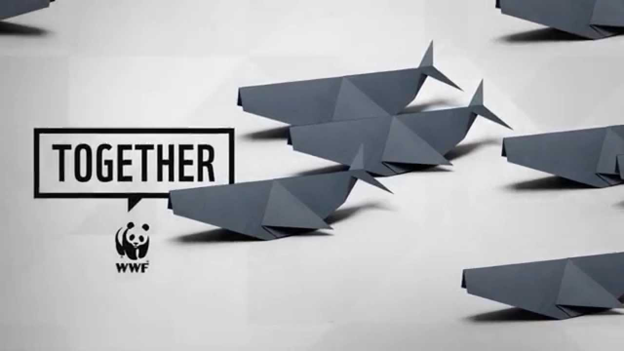 WWF Together - Whales - YouTube
