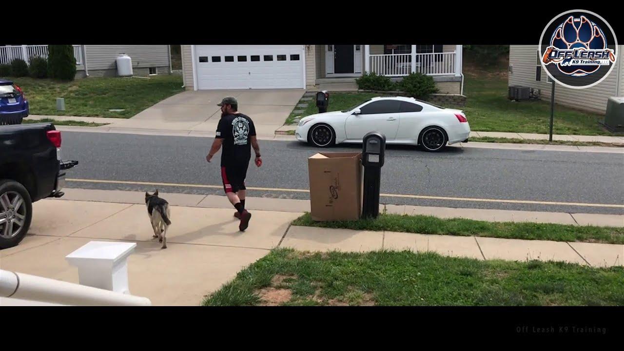 6 M/O German Shepherd, Savannah | Anxiety Dog Training | Off Leash K9  Training