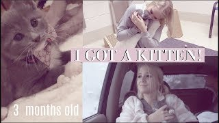 i adopted a kitten!! / Vlog