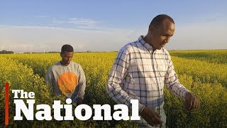 Asylum seekers share harrowing journeys to Canada