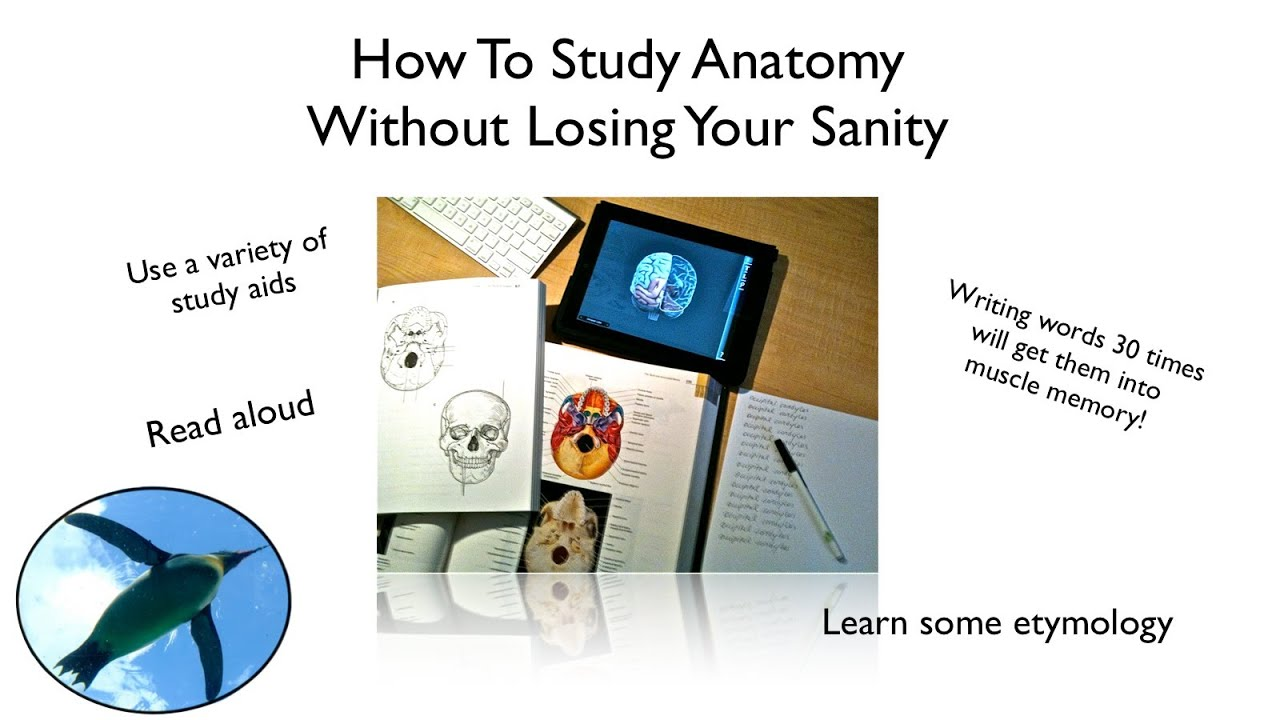 How To Study Anatomy Without Losing Your Sanity! - YouTube
